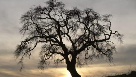 Tree Correspondences & Sacred Trees
