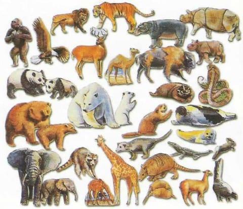 Animal Correspondences