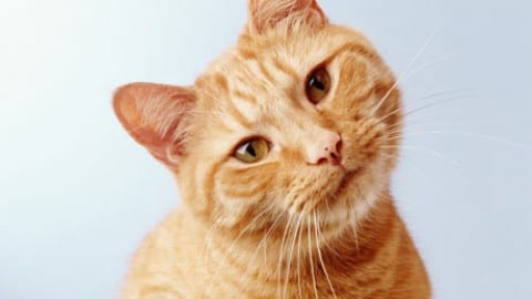 Cat Lore