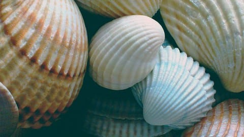 Shell Magic