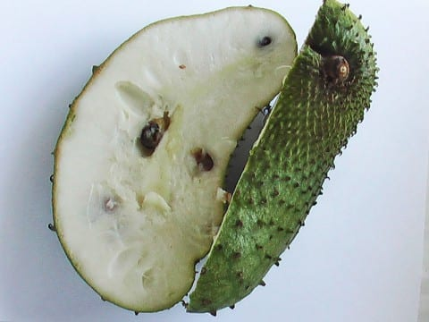 Soursop, a Cure for Cancer?