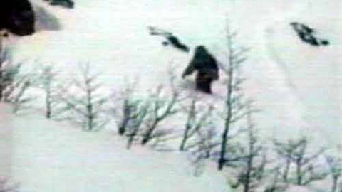 Hundreds of yetis live in Siberia, claims boffin