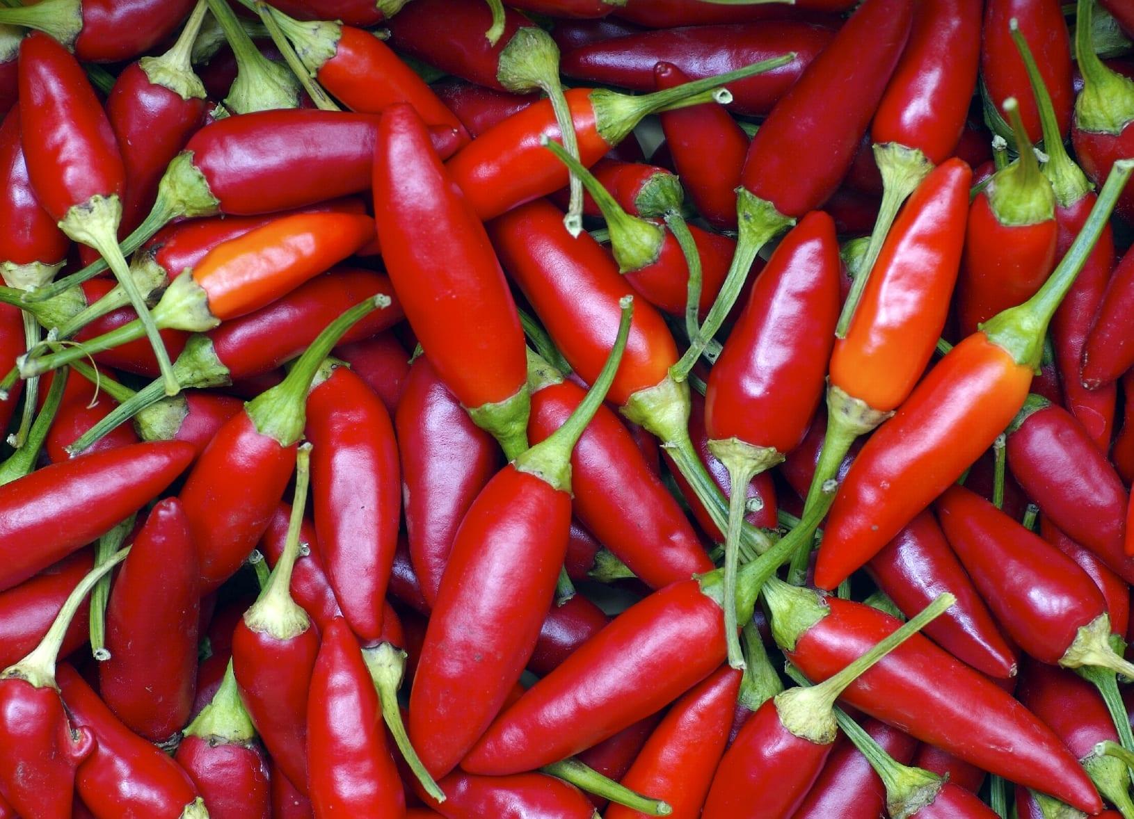 Chili Pepper • Luna's Grimoire