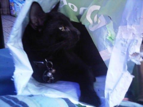 """""""I has a bag"""""""